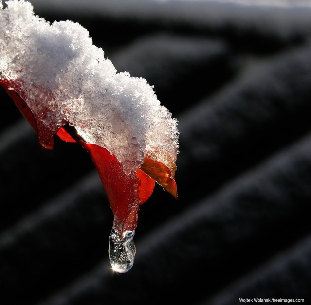 Snow on red leaf - February 2019 keeping you up to date on tax
