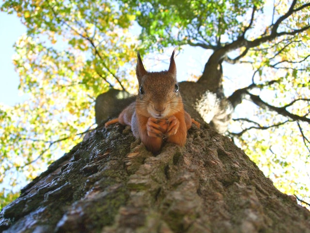 Squirrel and nuts - tax and BREXIT update October 2020
